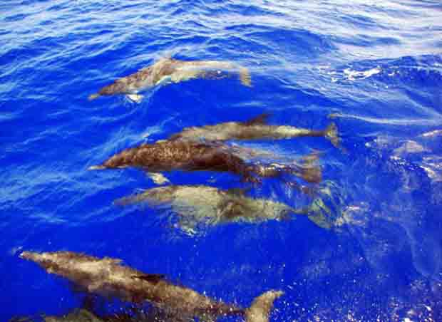 Spotting dolphins on the way